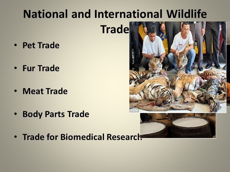 National and International Wildlife Trade Pet Trade Fur Trade Meat Trade Body Parts Trade Trade for Biomedical Research