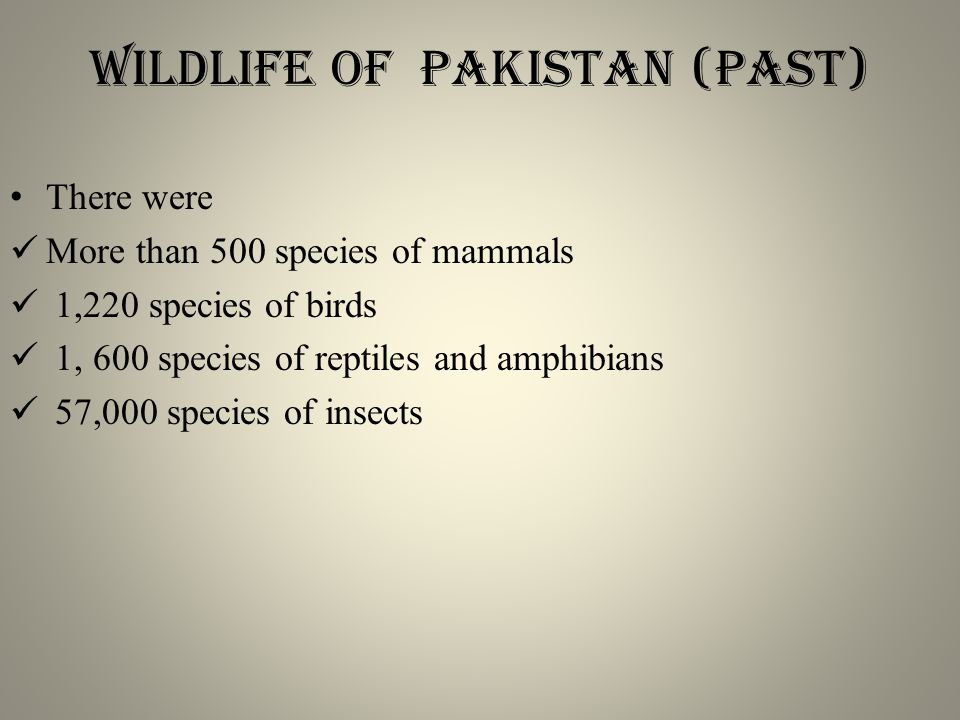 Wildlife of Pakistan (past) There were More than 500 species of mammals 1,220 species of birds 1, 600 species of reptiles and amphibians 57,000 species of insects