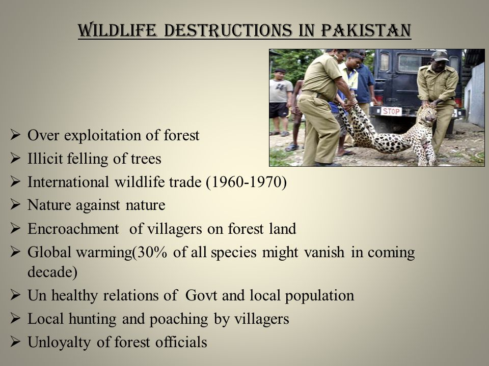 Wildlife destructions in Pakistan  Over exploitation of forest  Illicit felling of trees  International wildlife trade (1960-1970)  Nature against nature  Encroachment of villagers on forest land  Global warming(30% of all species might vanish in coming decade)  Un healthy relations of Govt and local population  Local hunting and poaching by villagers  Unloyalty of forest officials