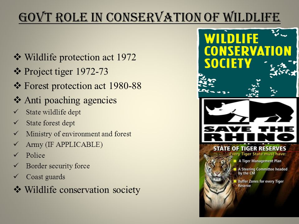 Govt role in conservation of wildlife  Wildlife protection act 1972  Project tiger 1972-73  Forest protection act 1980-88  Anti poaching agencies State wildlife dept State forest dept Ministry of environment and forest Army (IF APPLICABLE) Police Border security force Coast guards  Wildlife conservation society