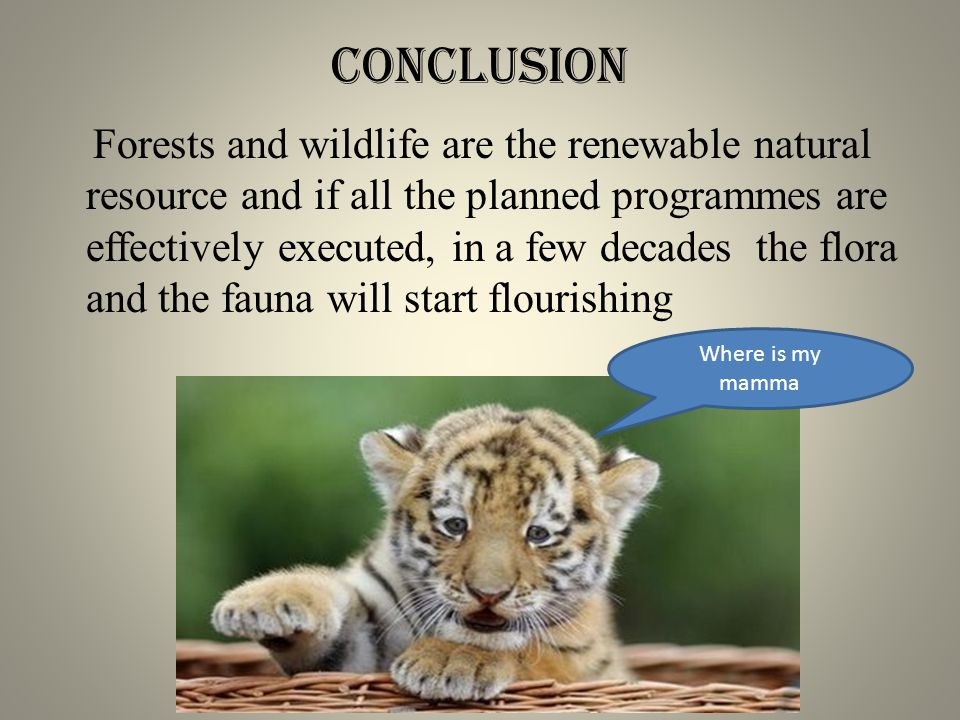 conclusion Forests and wildlife are the renewable natural resource and if all the planned programmes are effectively executed, in a few decades the flora and the fauna will start flourishing Where is my mamma
