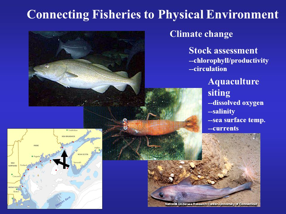 Connecting Fisheries to Physical Environment Aquaculture siting --dissolved oxygen --salinity --sea surface temp.