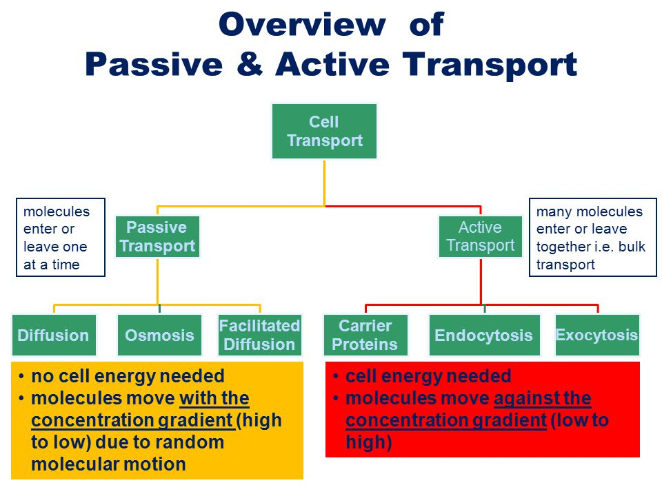 active and passive transport essay Active and passive transport of molecules through plasma membrane essay -  i the plasma membrane has a phospholipid bilayer which separates the inside (the cytoplasm) and the outside (extracellular fluid and lipid-soluble solutes) of the cell.