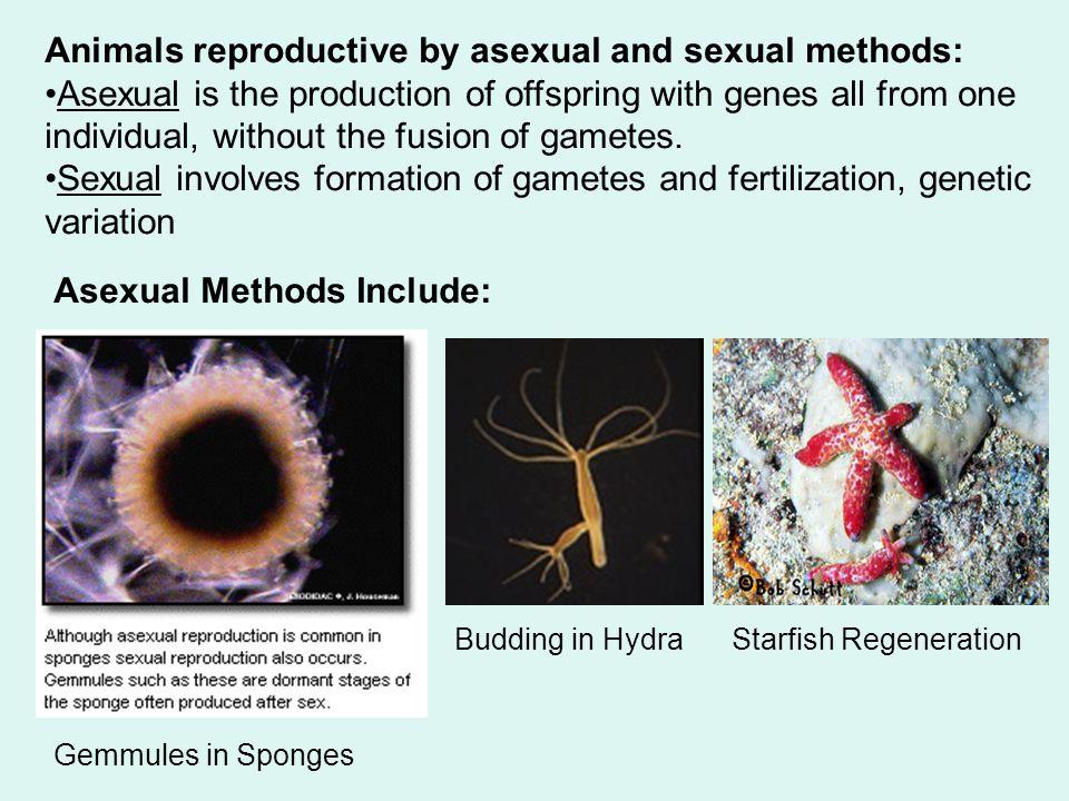 Porifera Part Two