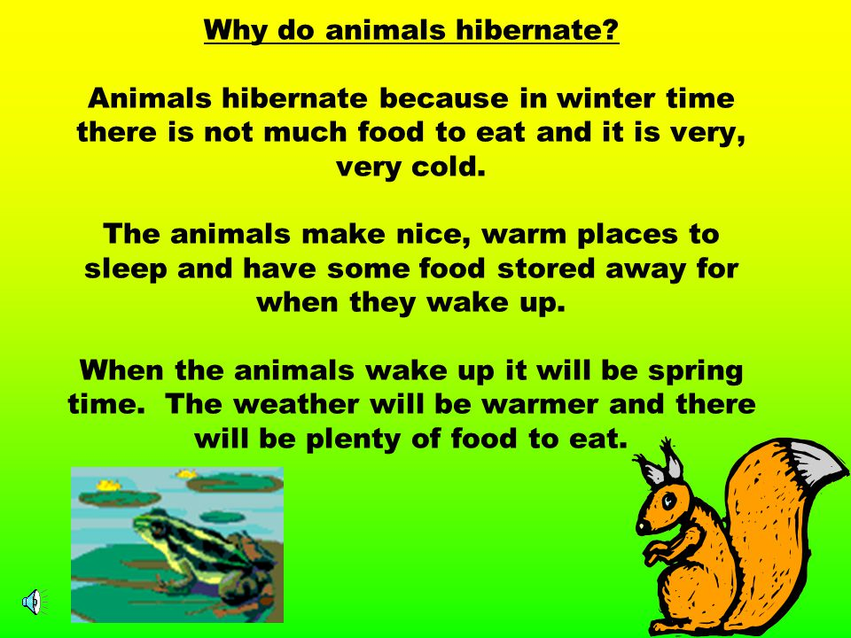 Hibernation is a time when some animals go to sleep, they sleep all of the way through the winter.