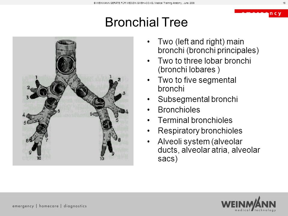 Medical Training - Anatomy - For internal use only. - ppt download