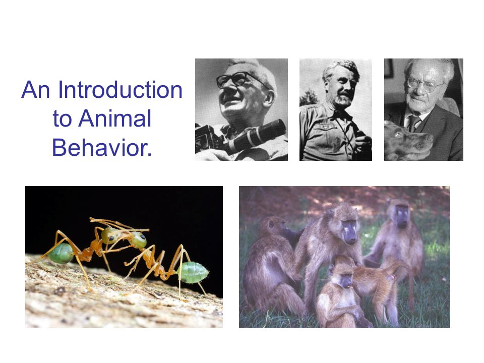 An Introduction to Animal Behavior. Next time…