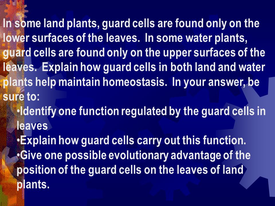 In some land plants, guard cells are found only on the lower surfaces of the leaves.