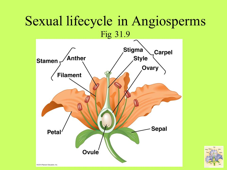 Chapter 31 Plant reproduction and growth Plant growth Fig ppt download