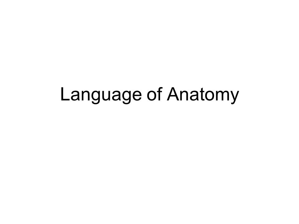 Language Of Anatomy Anatomical Position Positions Of Areas Are