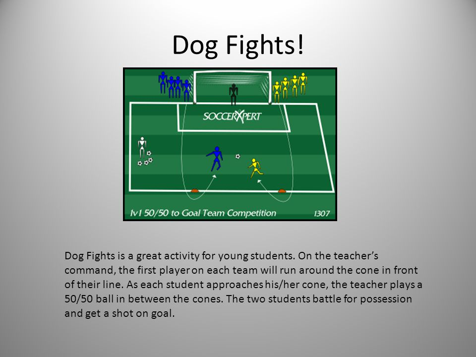 Dog Fights. Dog Fights is a great activity for young students.