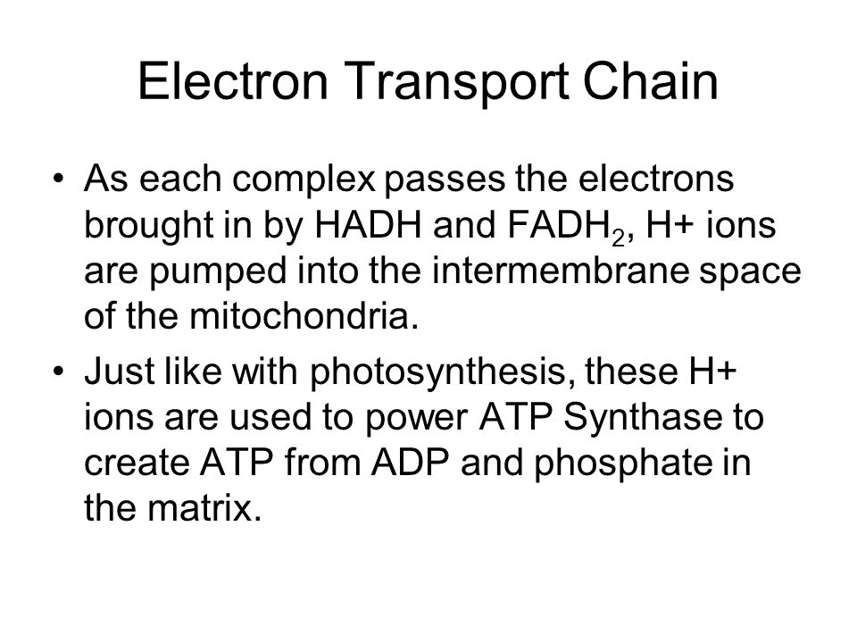 As each complex passes the electrons brought in by HADH and FADH 2, H+ ions are pumped into the intermembrane space of the mitochondria.
