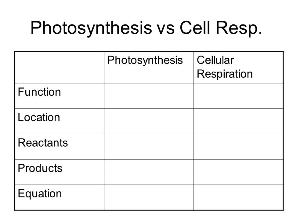 Photosynthesis vs Cell Resp.