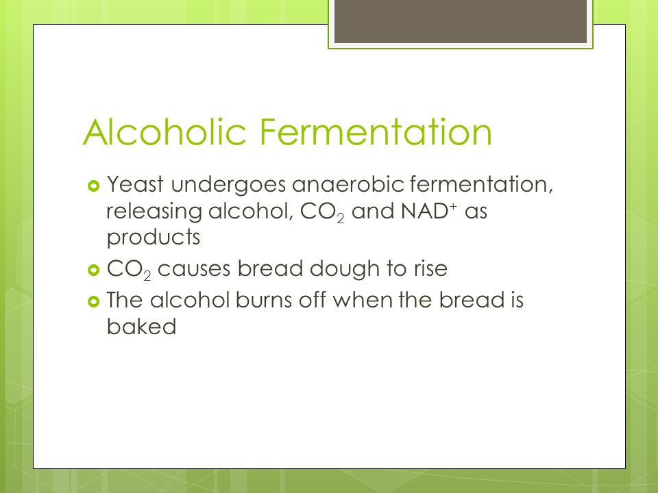 Alcoholic Fermentation  Yeast undergoes anaerobic fermentation, releasing alcohol, CO 2 and NAD + as products  CO 2 causes bread dough to rise  The alcohol burns off when the bread is baked