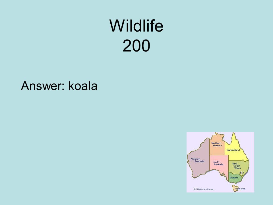 Wildlife 200 Answer: koala