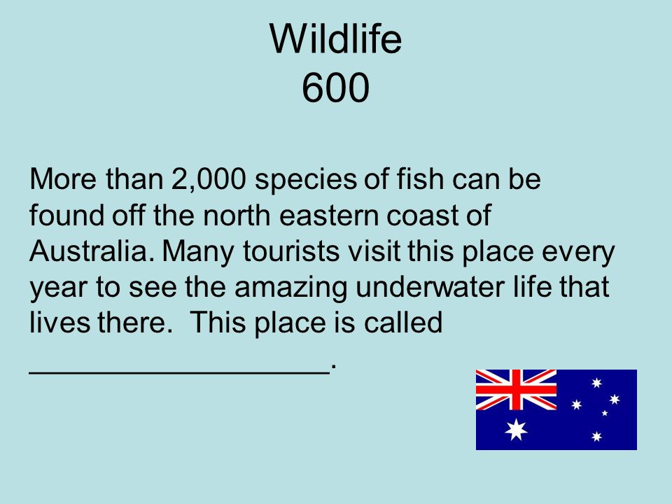 Wildlife 600 More than 2,000 species of fish can be found off the north eastern coast of Australia.