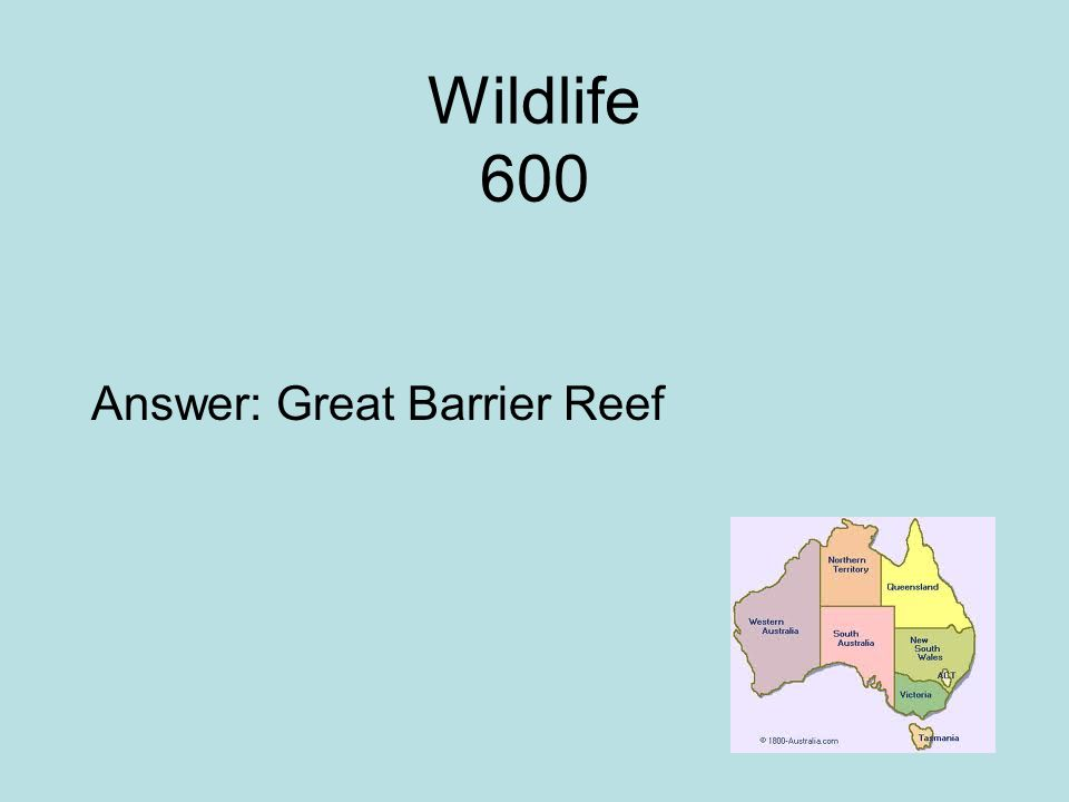 Wildlife 600 Answer: Great Barrier Reef