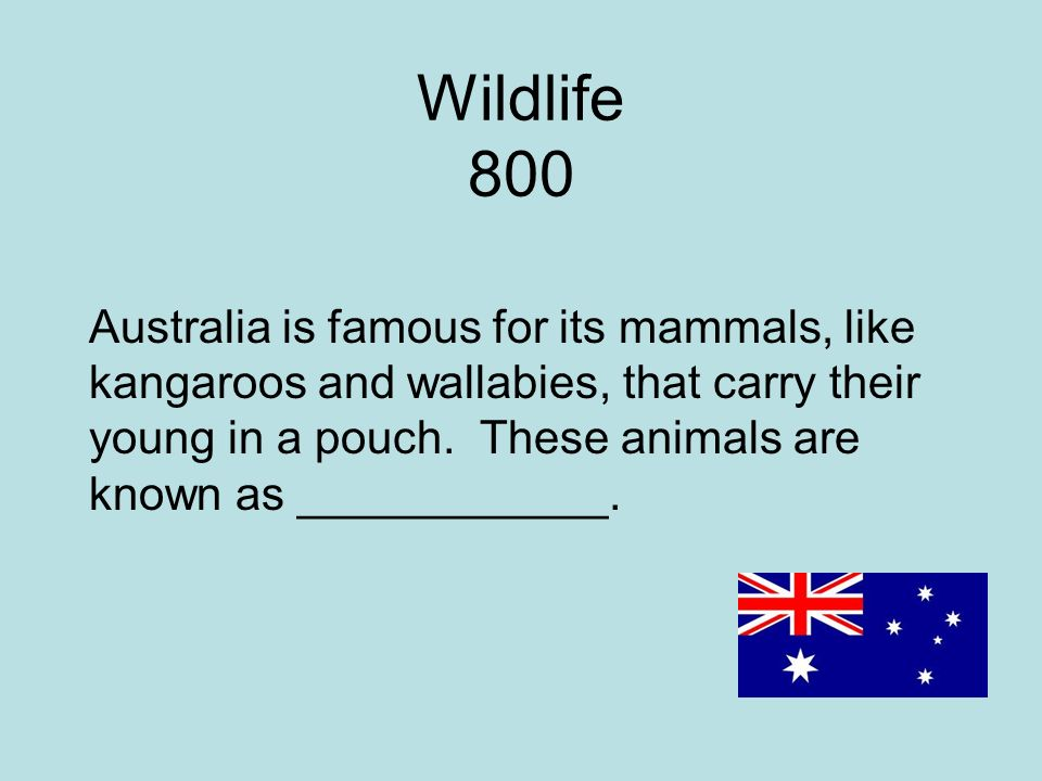 Wildlife 800 Australia is famous for its mammals, like kangaroos and wallabies, that carry their young in a pouch.
