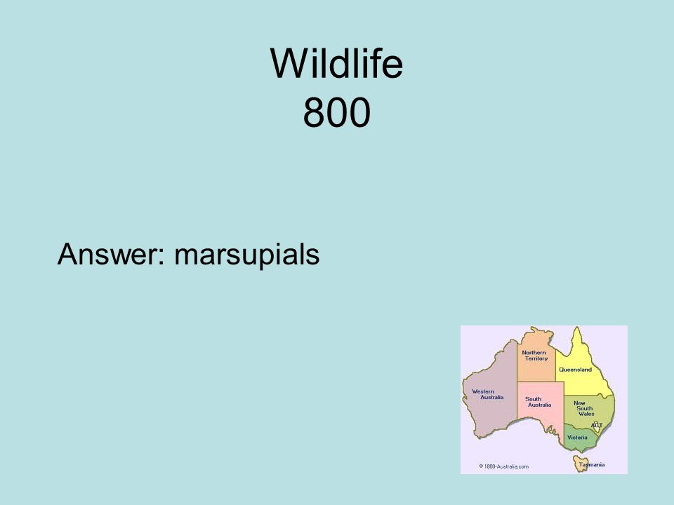 Wildlife 800 Answer: marsupials