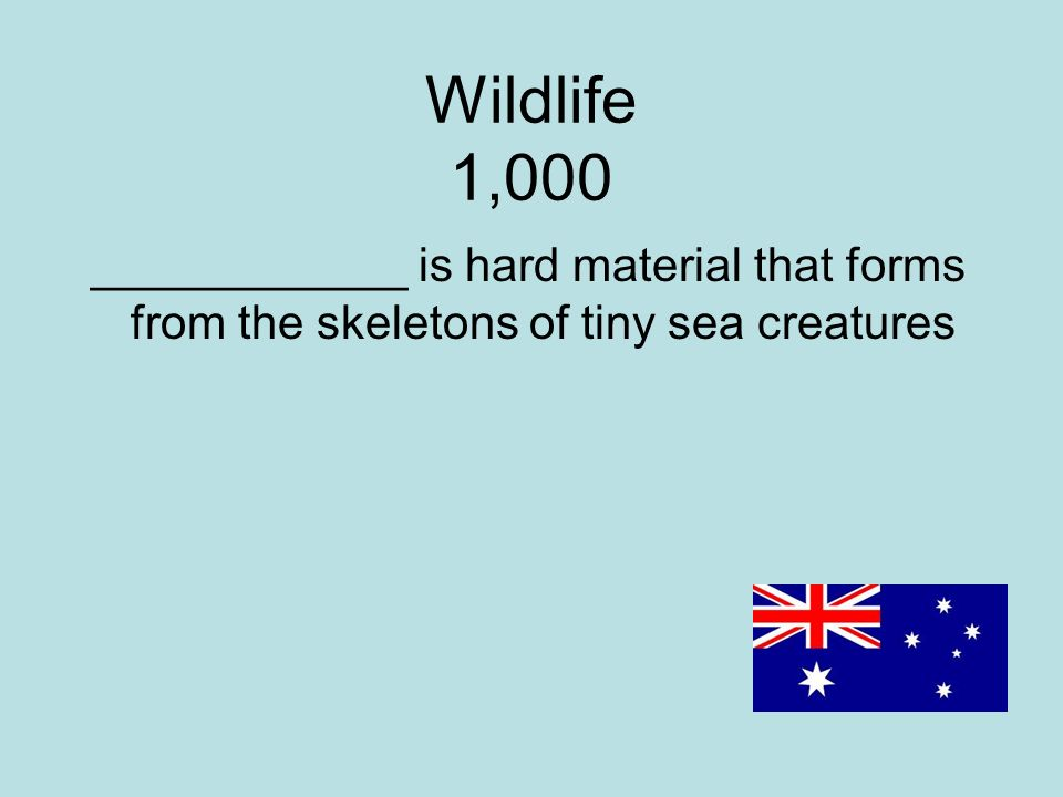Wildlife 1,000 ____________ is hard material that forms from the skeletons of tiny sea creatures