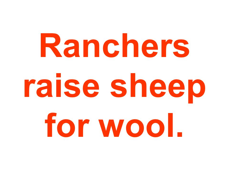 Ranchers raise sheep for wool.