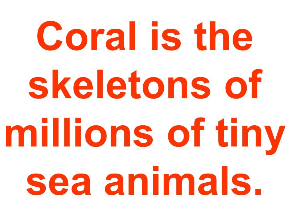 Coral is the skeletons of millions of tiny sea animals.