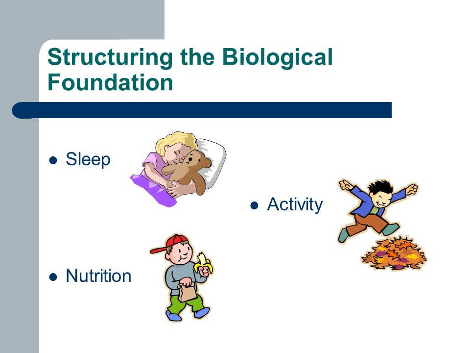 Structuring the Biological Foundation Sleep Nutrition Activity