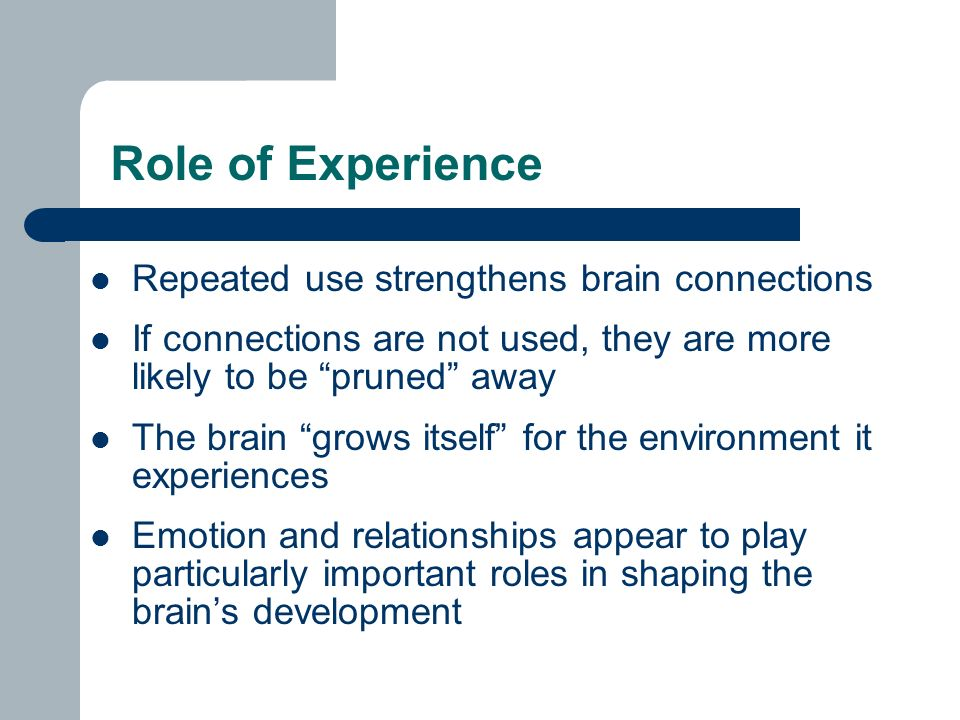 Role of Experience Repeated use strengthens brain connections If connections are not used, they are more likely to be pruned away The brain grows itself for the environment it experiences Emotion and relationships appear to play particularly important roles in shaping the brain's development