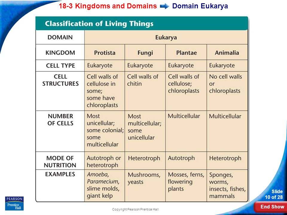 10 End Show 18 3 Kingdoms And Domains Slide  Copyright Pearson Prentice Hall Domain Eukarya