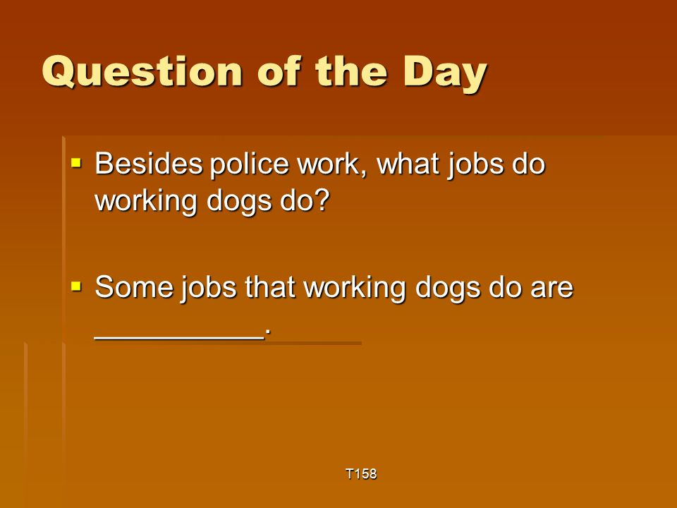 Question of the Day  Besides police work, what jobs do working dogs do.