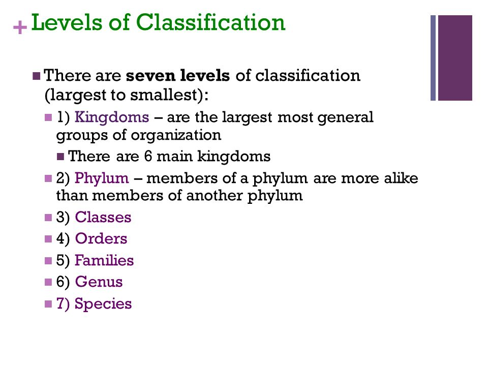 + Levels of Classification There are seven levels of classification (largest to smallest): 1) Kingdoms – are the largest most general groups of organization There are 6 main kingdoms 2) Phylum – members of a phylum are more alike than members of another phylum 3) Classes 4) Orders 5) Families 6) Genus 7) Species