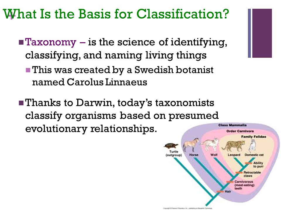 + What Is the Basis for Classification.
