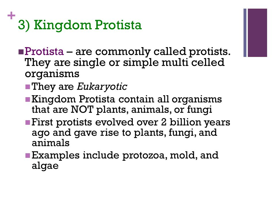 + 3) Kingdom Protista Protista – are commonly called protists.