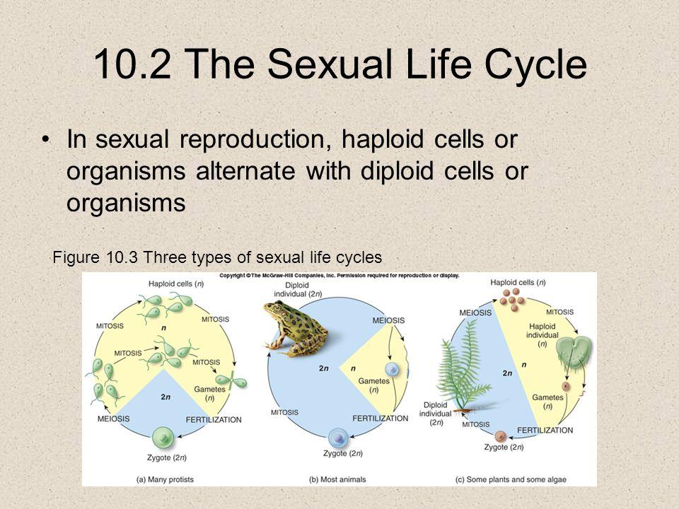 3 types of sex