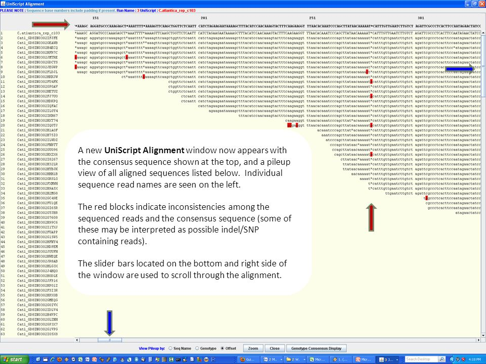 A new UniScript Alignment window now appears with the consensus sequence shown at the top, and a pileup view of all aligned sequences listed below.