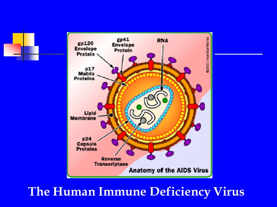 Nutrition: A Co-factor in HIV Infection/AIDS Progression Phara ...