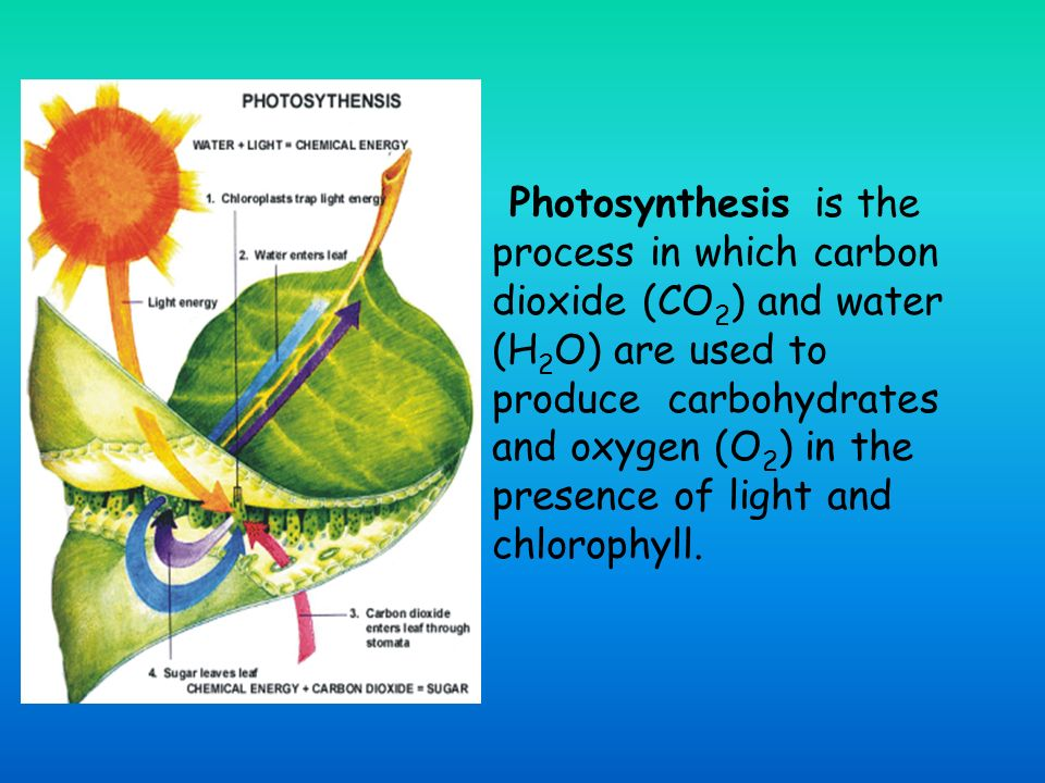 Photosynthesis is the process in which carbon dioxide (CO 2 ) and water (H 2 O) are used to produce carbohydrates and oxygen (O 2 ) in the presence of light and chlorophyll.