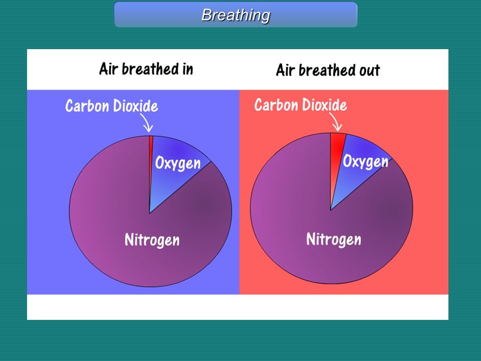 Breathing Breathing - Graphic