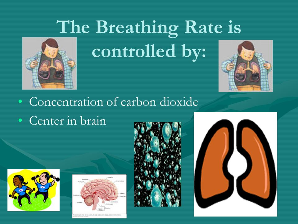 The Breathing Rate is controlled by: Concentration of carbon dioxide Center in brain