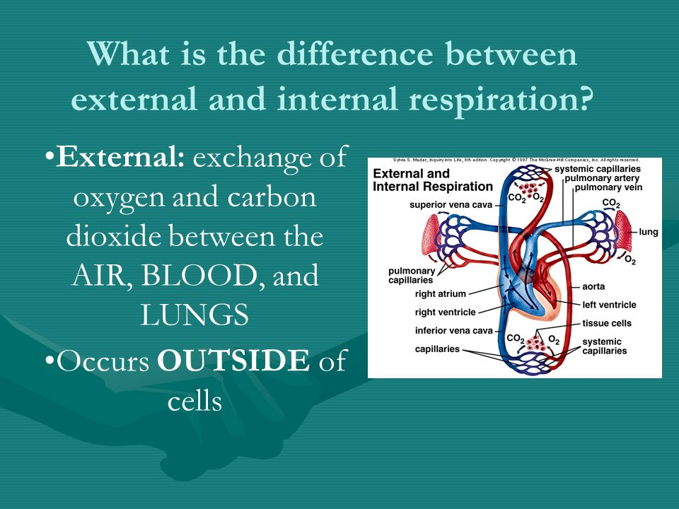 What is the difference between external and internal respiration.
