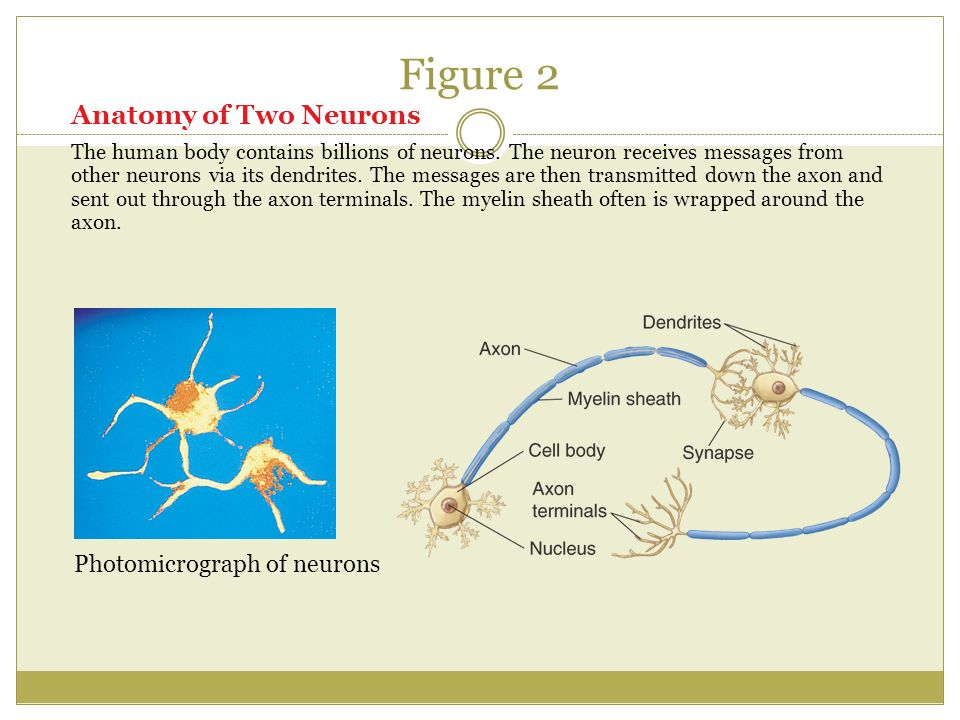 CHAPTERS 6, 8, 12, 15 UNIT 3 REVIEW. THE BRAIN AND BODY Chapter ppt ...