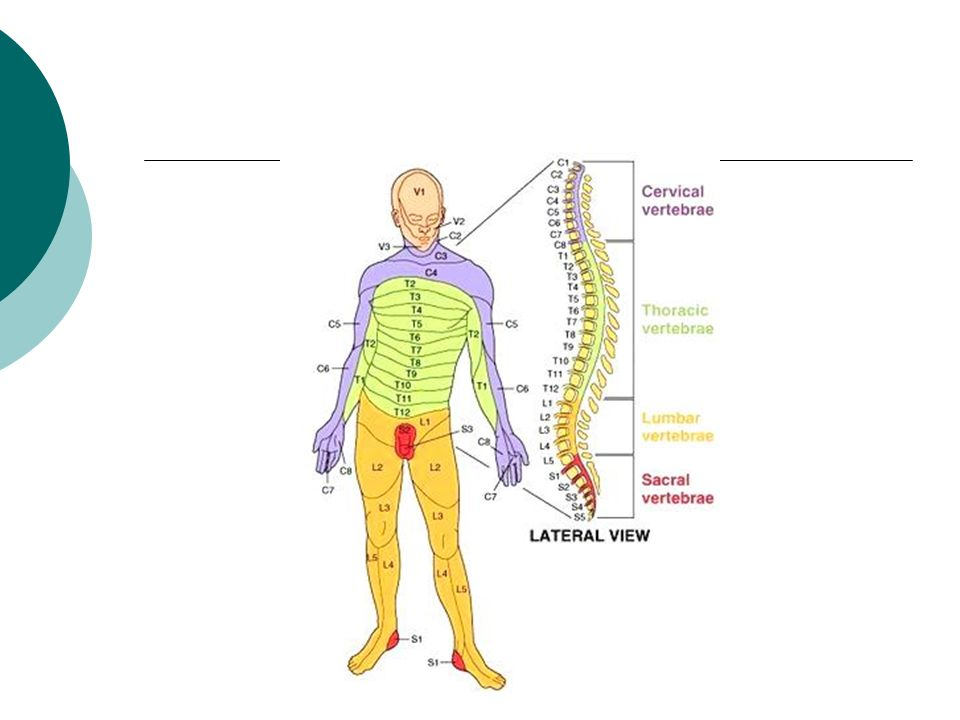 Anatomy and Injuries to the Spine Spain Park Sports Medicine. - ppt ...