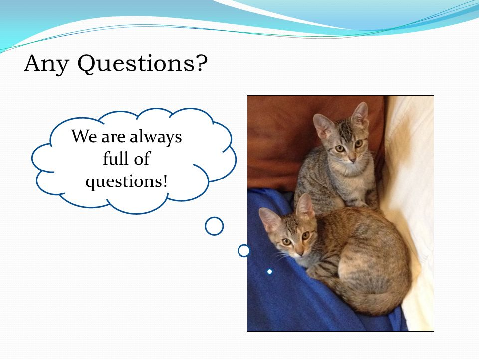 Any Questions We are always full of questions!