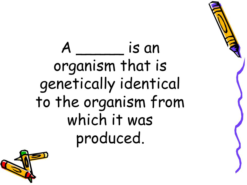 A _____ is an organism that is genetically identical to the organism from which it was produced.