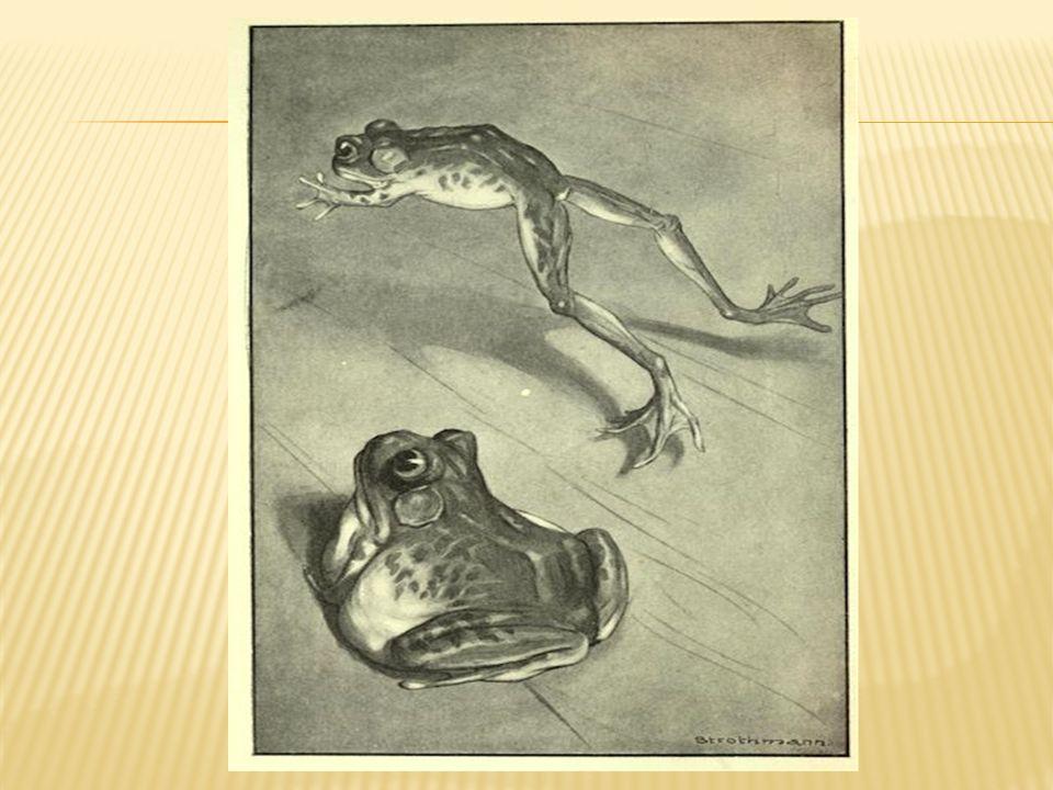 notorious frog of calaveras county