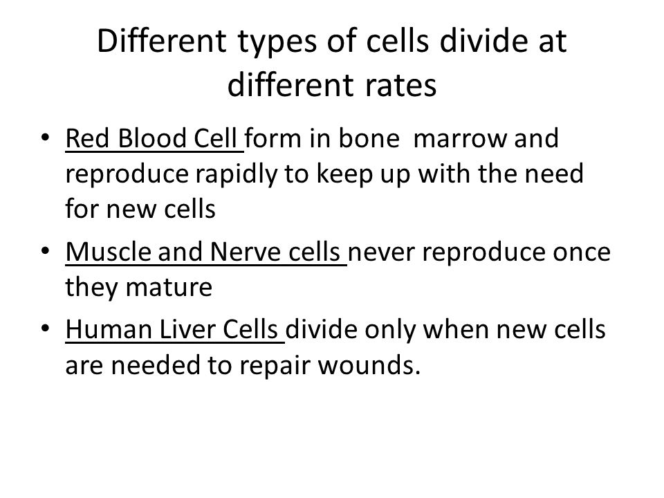 Mature human nerve cells and muscle cells