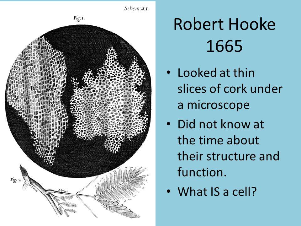 robert hooke and cells
