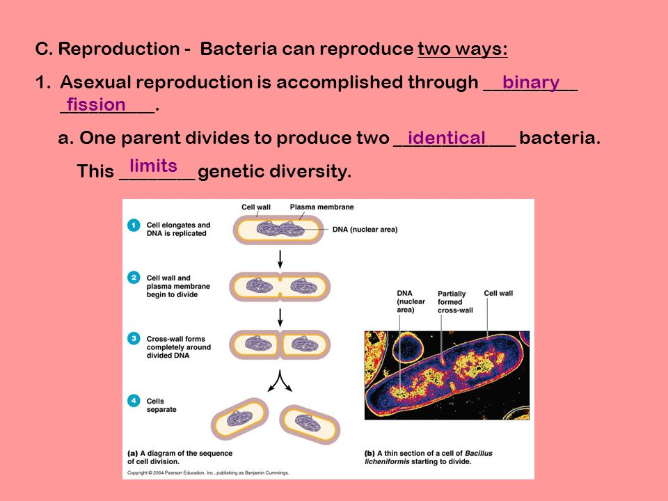 Asexual reproduction bacteria called mrsa