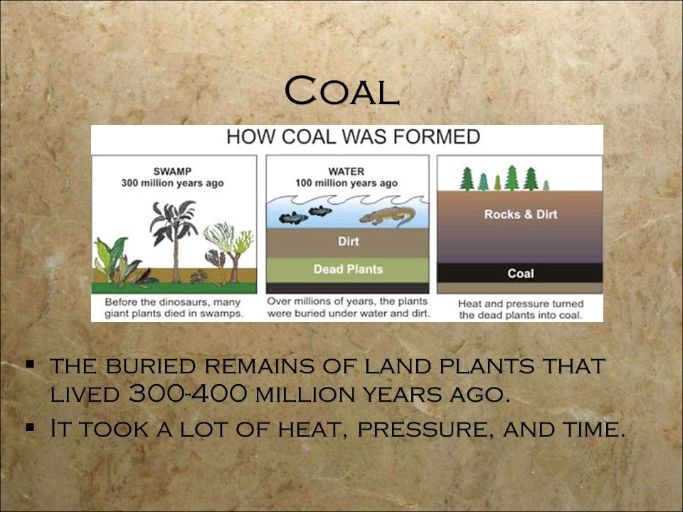 Coal  the buried remains of land plants that lived million years ago.