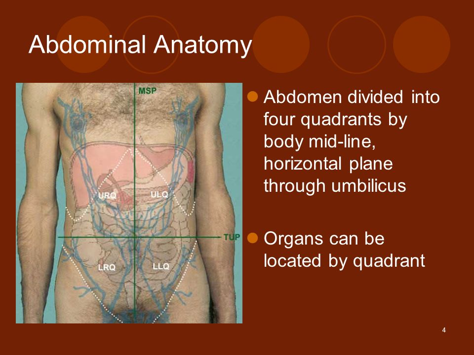 1 abdominal pain amy little md albany medical center ppt download 4 4 abdominal anatomy abdomen divided into four quadrants by body mid line horizontal plane through umbilicus organs can be located by quadrant ccuart Gallery